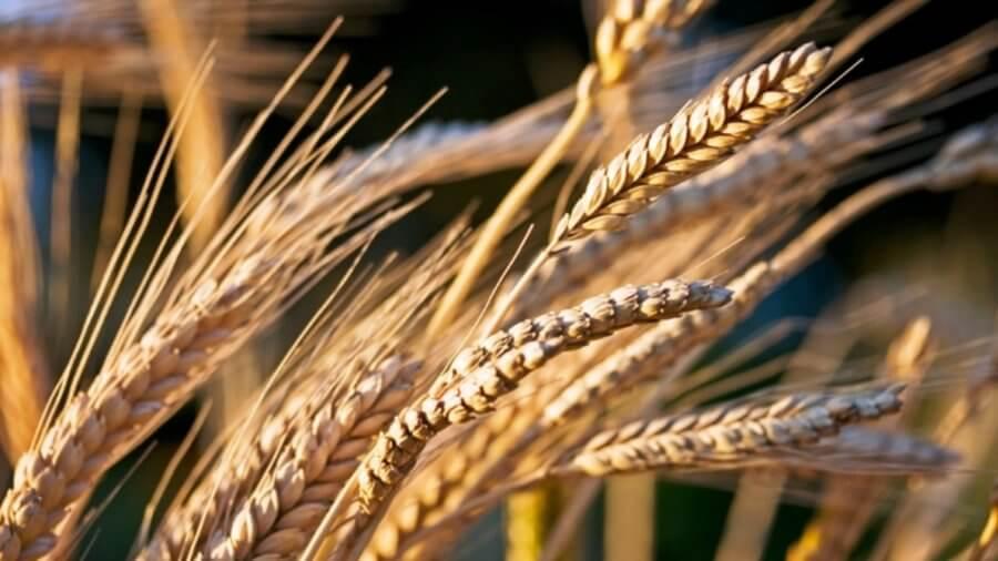 Выбирайте макароны из твердых сортов пшеницы